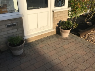 New pots and plants